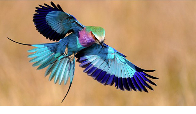 ray_bird